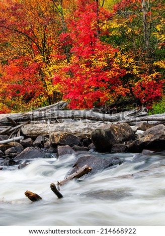 A pile of driftwood lies by a rushing rocky stream in a colorful forest during the autumn season.  - stock photo
