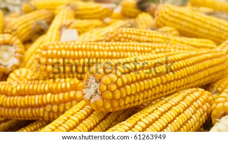 A pile of golden corn