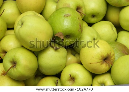 a pile of green apples recently picked and sent to market