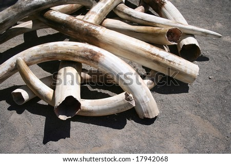 A pile of ivory tusks - stock photo
