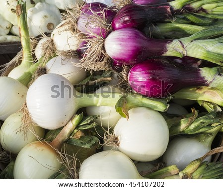 A pile of just harvested summer onions at farm market. - stock photo
