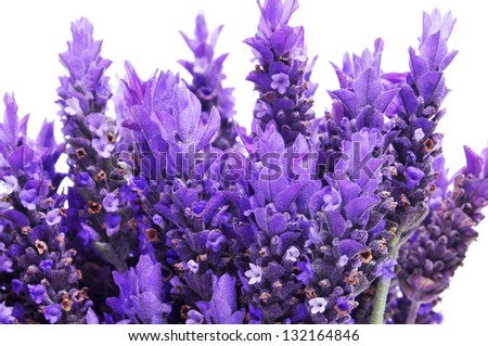 a pile of lavender flowers on a white background - stock photo