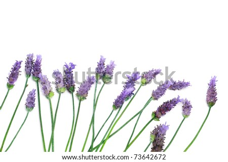 a pile of lavender flowers on a white background