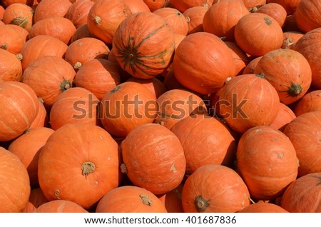 A pile of pumpkins in the sun