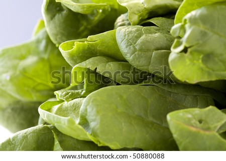 A pile of raw nutritious spinach leaves.