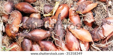 a pile of rotting onions in the soil covered in dust and a cobweb and old leaves - stock photo