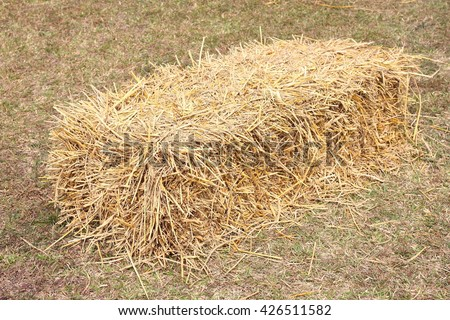 a pile of straw on field, straw bales after harvest. - stock photo