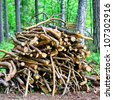 A pile of twigs firewood in forest - stock photo