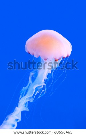 a pink colored jelly-fish against a blue background - stock photo