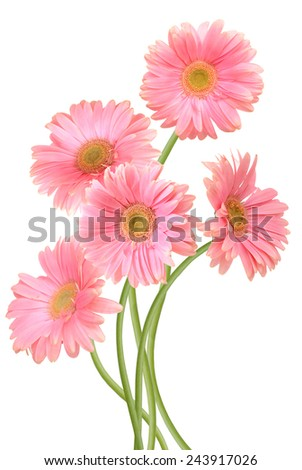 A pink gerber flowers  - stock photo