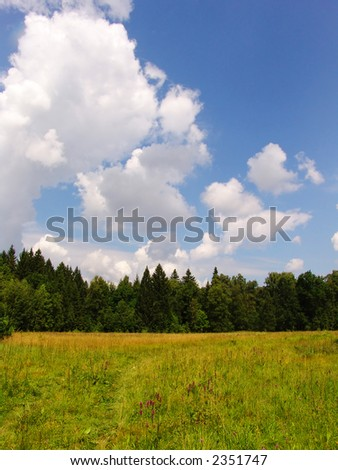 A plain summer forest view suitable for backgrounds