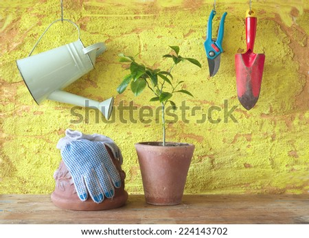 A plant in a flower pot with gardening tools, gardening concept - stock photo