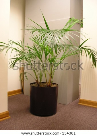 A plant in an office