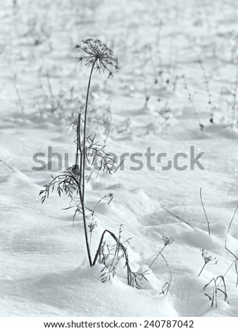 A plant in the snow.  - stock photo