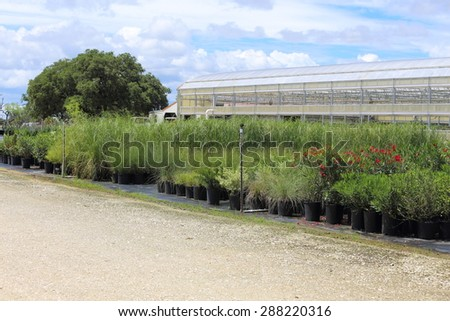 A Plant nursery that has different species of plants lined up in rows.