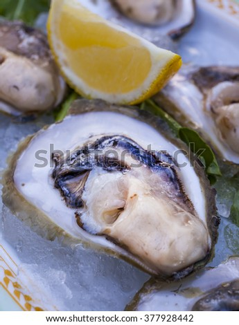 A platter of fresh raw oysters with lemon. - stock photo