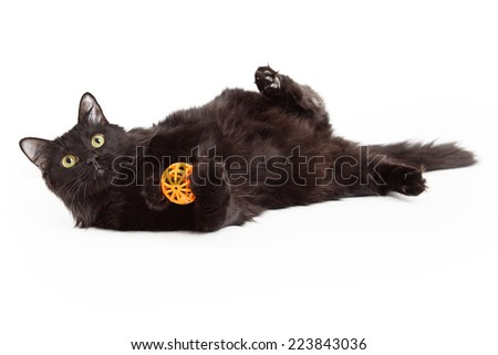 A playful young black cat laying on its back and holding an orange ball - stock photo