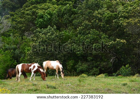 A pony and a horse grazing on a paddock in front of green trees. - stock photo