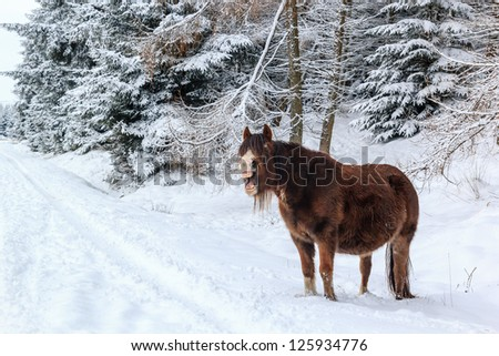 A pony opening its large mouth in a snowy forest - stock photo