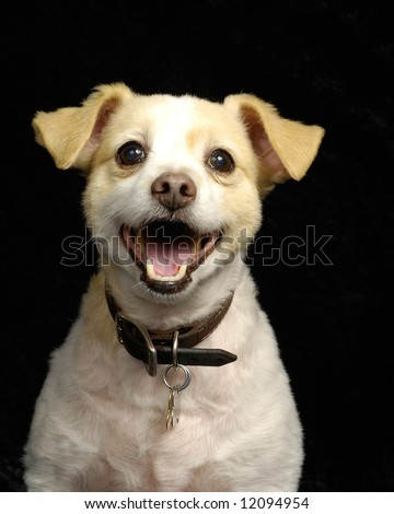 A portrait of a cute, smiling, young dog - stock photo