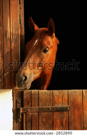 A portrait of a horse in the sunset - stock photo