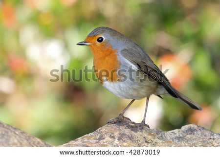 a portrait of a little and fantastic bird - stock photo