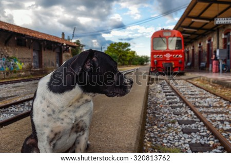 A portrait of a lonely dog that is feeling sad while the train leaves the station - stock photo