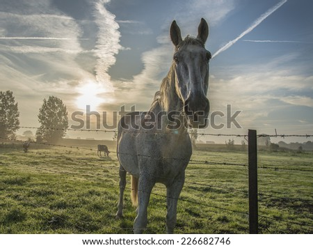 A portrait of a white horse with a wonderful sunset on the background - stock photo