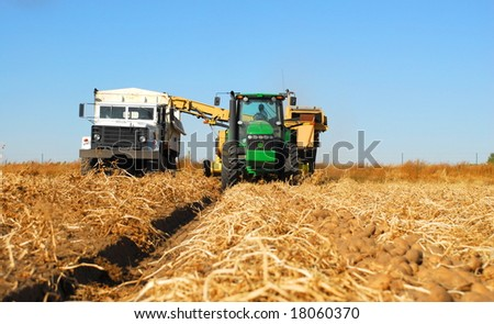 "A potato combine or ""digger"" and its tender truck harvests potatoes in Idaho. - stock photo"
