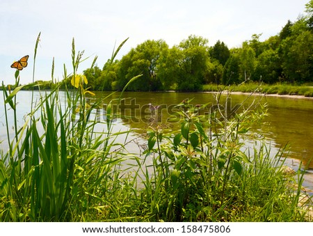 A pretty lake in the summer, with a duck passing by, and a monarch butterfly feeding on a yellow water iris. - stock photo