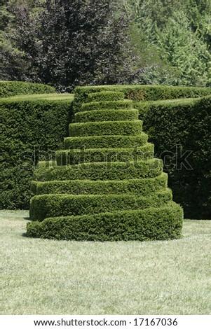 A pretty topiary - stock photo