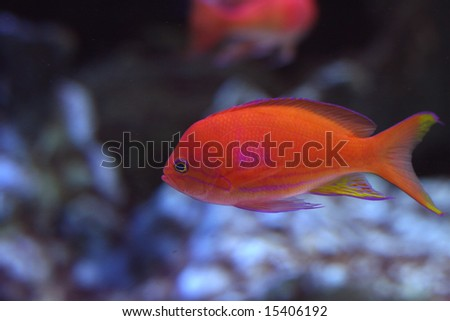 A pretty tropical fish swimming in the reef.