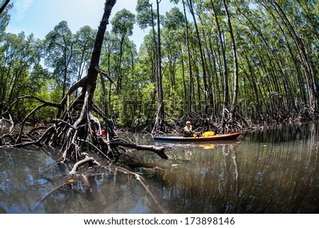 A pristine mangrove forest grows in the Mergui Archipelago, Myanmar. Mangroves are best explored by kayaking when the tide is high. These flooded forests are ecologically important to region.
