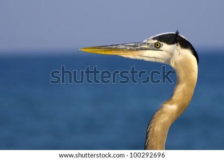 A profile of a Heron on the gulf coast. - stock photo