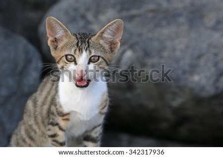 A profile shot of an adorable kitten meowing. - stock photo