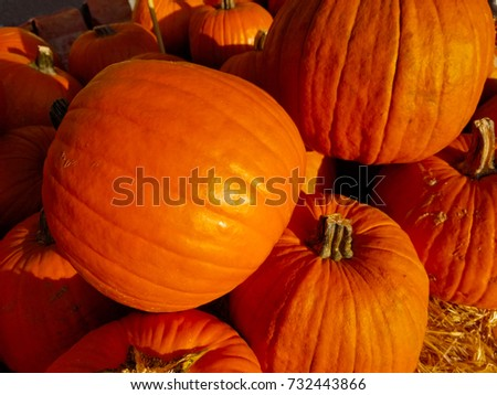 A proliferation of pumpkins at a Central California market signifies that Halloween is near.