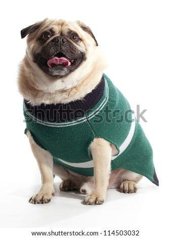 A pug wearing a sweater sitting on a white background
