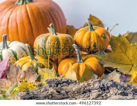 A pumpkin is a cultivar of the squash plant, most commonly of Cucurbita pepo