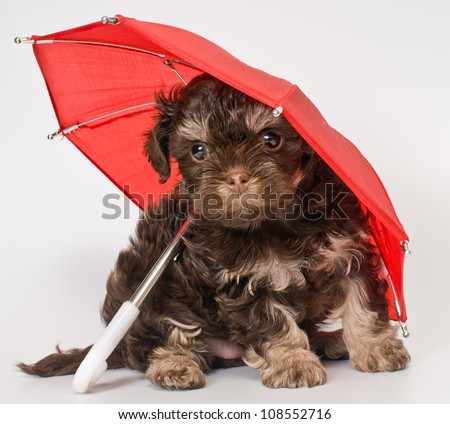 A puppy under the umbrella