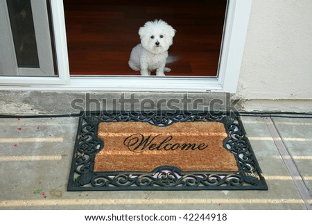 a purebred bichon frise sits at the door greeting her friends with a welcome mat - stock photo