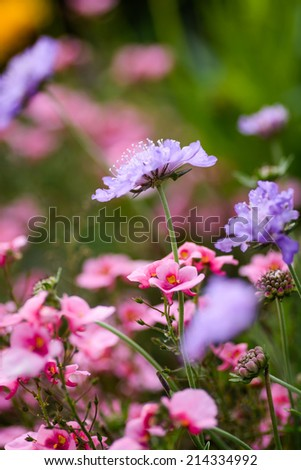 A purple flower in an English Meadow in summertime - stock photo
