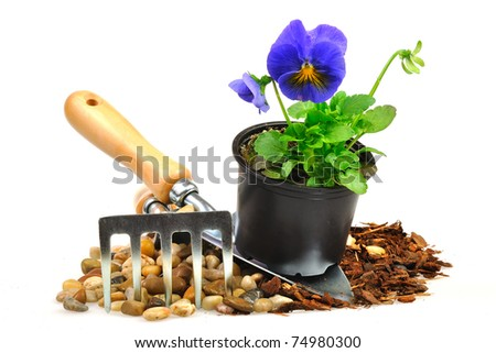 a purple pansy on the shoulder of the stones and the bark - stock photo