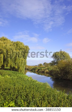 a quiet riverside scene in autumn with willow trees under a blue sky