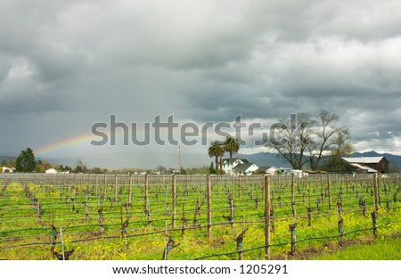 A rainbow bends over misty vineyards. - stock photo