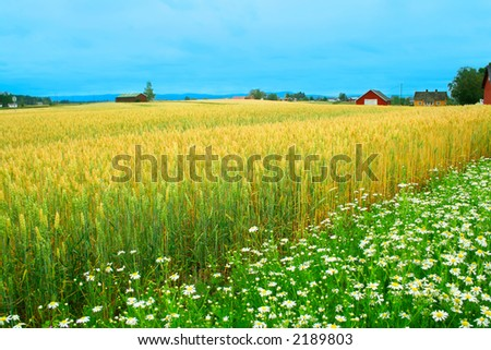 A rainy day in Norwegian farmland - stock photo