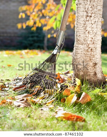 A rake and autumn leaves in a garden - stock photo