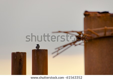 A raven perched on a pole - stock photo