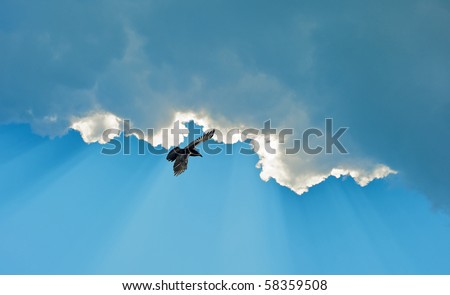 A raven soars high against a brilliant blue sky with sun beams and clouds. - stock photo