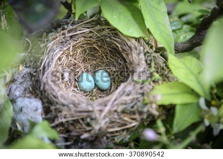A real birds nest with eggs in a tree - stock photo