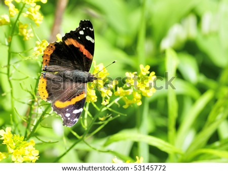A red admiral butterfly perched on a flower.